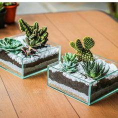 Best 12 Very nice - SkillOfKing.Com - Jardines en miniatura wedding Terrarium succulentes Succulents In Containers, Cacti And Succulents, Planting Succulents, Cactus Plants, Cactus Flower, Succulent Bowls, Succulent Gardening, Succulent Arrangements, Terrarium Cactus