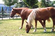 farm animals - Google Search