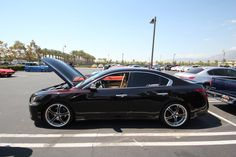 Team Hybrid's Sean Sheppard Shows Off His Customized 2010 Nissan Maxima 2010 Nissan Maxima, Rims For Cars, Automotive Art, Oil Filter, Toyota Camry, Performance Parts, Dream Cars, Classic Cars, Trucks