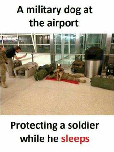 Military dogs are heroes! Cute Funny Animals, Cute Baby Animals, Funny Cute, Funny Dogs, Animals And Pets, Cute Puppies, Cute Dogs, Dogs And Puppies, Cute Babies