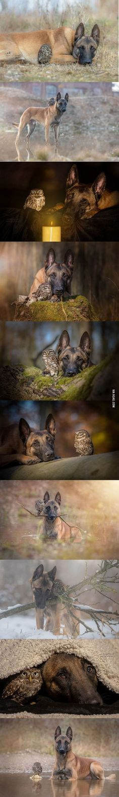 Friendship between a dog and an owl. I really need to create an Animal Odd Couple file...