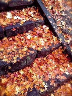 We love this stone stairway that's covered in fallen leaves! All the warm fall colors of the leaves contrasted w/ the dark stone are stunning. Just the epitome of fall!