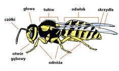 """""""Animal Body Parts"""" Vocabulary in English - ESLBuzz Learning English Insect Body Parts, Animal Body Parts, Learn English For Free, Improve Your English, Primary Science, Science Curriculum, English Words, English Language, English Test"""