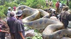 25 Unbelievable Snake Images