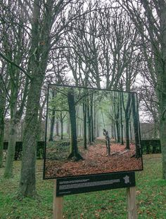 Picture of a Forest in a Forest by Carolyn Chase