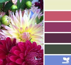 Color Inspiration  .