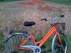cottage street ;)) orange bike