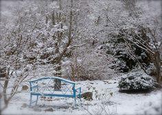Front Garden - Deb's Garden Blog