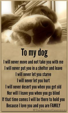 To My Dog!