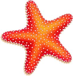 Orange Starfish - Free Clip Arts Online | Fotor Photo Editor