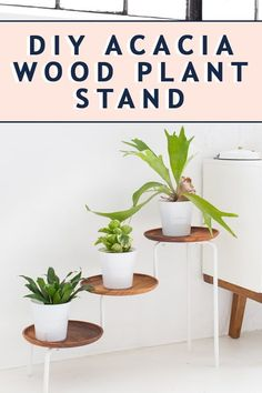 Home Interior Cuadros Ring in summer with this simple and very doable Modern DIY Acacia Wood Plant Stand! Interior Cuadros Ring in summer with this simple and very doable Modern DIY Acacia Wood Plant Stand! Industrial Office Design, Modern Office Design, Office Interior Design, Modern Decor, Diy Interior, Wood Plant Stand, Plant Stands, Commercial Office Design, Hacks Diy