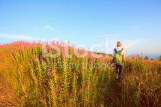Wildflower Alpine Meadow   Mid Adult Women Hiker     Mountain Landscape royalty-free stock photo