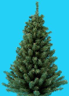 "Kurt Adler 18"" Miniature Pine Christmas Tree Kurt Adler http://www.amazon.com/dp/B002TGWK6A/ref=cm_sw_r_pi_dp_GsOnwb0XTFN1X"