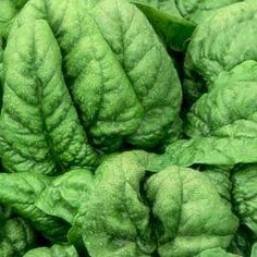 Spinach Growing Guide   Rodale's Organic Life