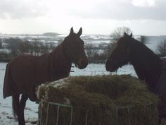 Flash & Welfield Pete in winter