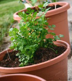 With the right ingredients on hand, you can mix up your own batch of healthy potting soil.