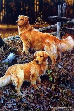 In this Jerry Gadamus print a pair of gorgeous golden retrievers stand alert in a leafy field. Something has gotten their attention--maybe a hunter has made his first shot.