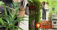 Budú kvitnúť ako na baterky: Najsilnejšia živina pre kvitnutie zaručí, že taký kaktus bude obsypaný aj dlho po sviatkoch!