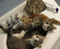 PetsLady's Pick: Funny Overcrowded Sink Cats Of The Day ... see more at PetsLady.com ... The FUN site for Animal Lovers