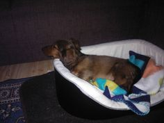 Kyösti`s first bed, now that is really small for him. he he he..