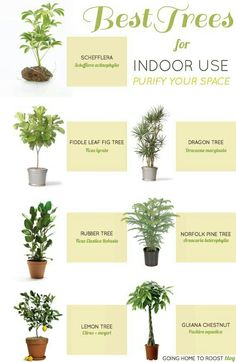 Purify your home with these indoor trees. / Purify your home with these i . - Purify your home with these indoor trees. / Purify your home with these indoor trees. Container Gardening, Gardening Tips, Organic Gardening, Indoor Gardening, Gardening Vegetables, Urban Gardening, Vegetable Garden, Kitchen Gardening, Texas Gardening