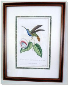 Hummingbird. 36  Information: This decorative, hand-colored copper-plate engraving comes from the first edition of Lesson's landmark work on hummingbirds entitled The Natural History of Hummingbirds or Histoire Naturelle des Oiseaux-Mouches. Rene Primevere Lesson's work preceded Gould's by more than 20 years, and was published between 1829 and 1833. Lesson, a French naturalist and explorer, traveled on la Coquile and became enthralled with the remarkable birds.