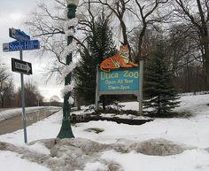 Zoo, Utica NY