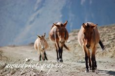 Awardphotographie, Jomson Treck, Nepal