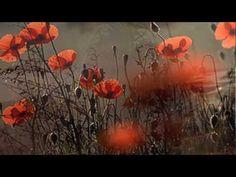 Ennio Morricone & Dulce Pontes ~ Your Love