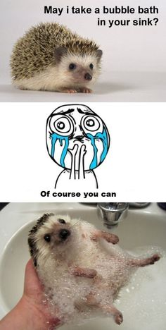Hedgehog wants a bath in your sink.
