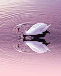 Graceful Reflections Print By Sharon Lisa Clarke