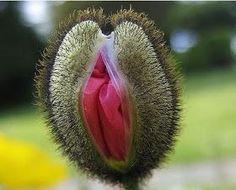 Piante,Fiori, frutta,insetti e farfalle - Raccolte - Google+