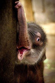 Beautiful baby, (Photo Timur Emek / dapd / Sean Gallup)