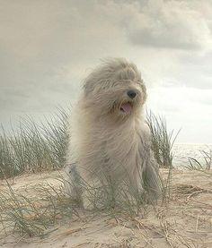 I love the wind....