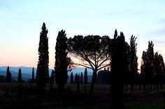 Dawn at Toscana