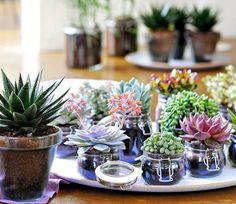 Más razones para tener plantas en casa:  Reducen el estrés. Alivian la depresión. Disminuyen la presión arterial. Aumentan la productividad.  Aumentan el optimismo.
