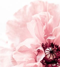 light and airy pink peony