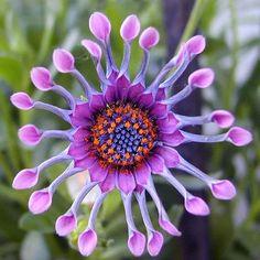 las flores exoticas - Buscar con Google