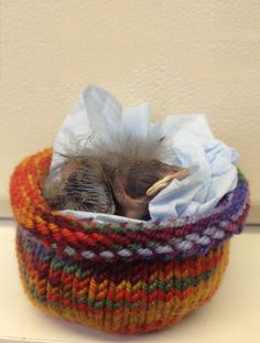 Knitted nests serve as temporary homes for orphaned wild birds. (Courtesy of Photo by Melanie Piazza/WildCare)