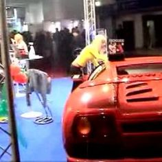 Blond and her hot 🚗