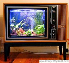 Hồ cá cổ điển từ tivi cũ.