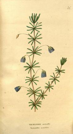 ser.3:v.1 (1847) - Annales de flore et de pomone : - Biodiversity Heritage Library