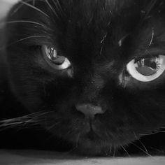 #photo #blackwhite #bw #catlovers #cats My Photo Album, Cat Lovers, My Photos, Black And White, Cats, Animals, Instagram, Gatos, Animales