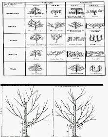Gradinarit anotimp cu anotimp: Forme de coroana ale pomilor fructiferi Gardening, Plant, Shape, Lawn And Garden, Horticulture