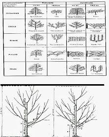 Gradinarit anotimp cu anotimp: Forme de coroana ale pomilor fructiferi Gardening, Shape, Lawn And Garden, Yard Landscaping, Horticulture