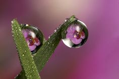 22.dewdrop reflection photos