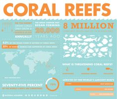 Bright, beautiful and overflowing with life, coral reefs are among the most incredible natural wonders in the world!