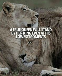 67 Great Inspirational Quotes & Motivational Words To Keep You Inspired - Trend True Quotes 2020 Great Inspirational Quotes, Motivational Words, Citation Lion, Wisdom Quotes, True Quotes, Qoutes, Lioness Quotes, Citation Motivation Sport, Lion And Lioness