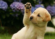 Puppy waving goodbye