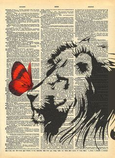 one of our favorite images - butterfly on the nose of the lion